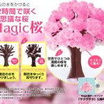 外国人のお土産で人気爆発中のマジック桜を買ってみた。写真や感想