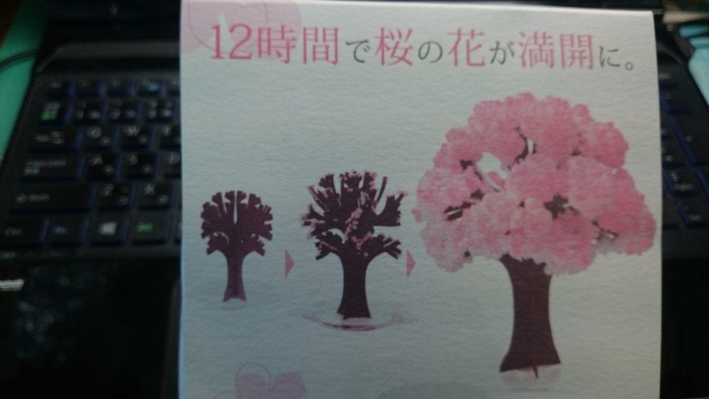 Magic桜