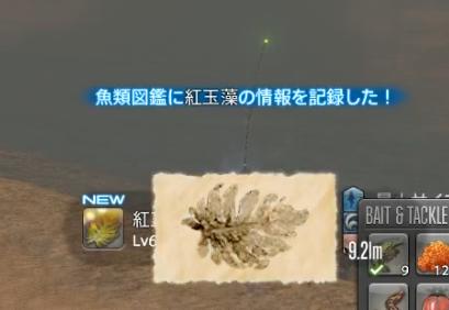 紅玉海_沖之岩_紅玉藻
