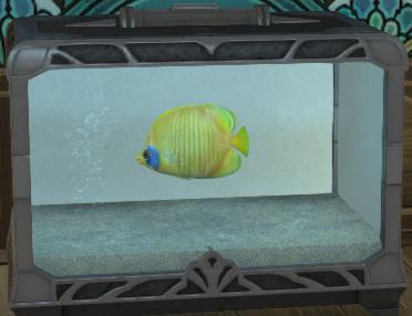 ゴールデンフィン水槽