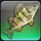 【FF14ヌシ釣り】中央ラノシア ニーム川で「ハイパーチ」を釣る