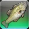 【FF14ヌシ釣り】低地ラノシア エンプティハートで「フェアリークィーン」を釣る
