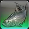 【FF14ヌシ釣り】低地ラノシア オシュオン灯台で「シルバーソブリン」を釣る