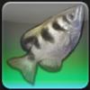 【FF14】東ラノシア 東アジェレス川のヌシ「ドラウンドスナイパー」を釣る